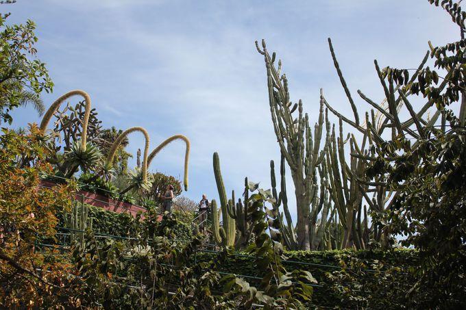 風景と草花の織り成す絶妙なコントラスト