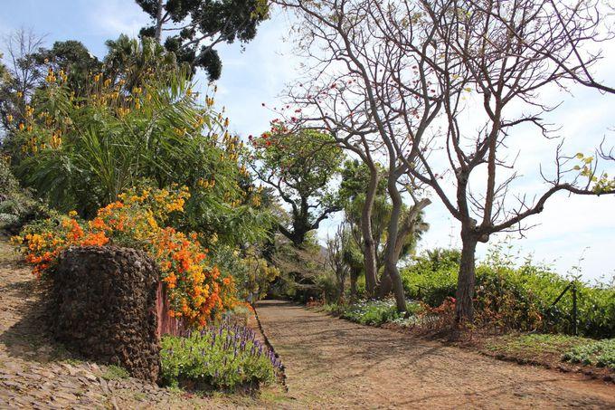 フォトジェニックな園内で世界の植物と記念撮影