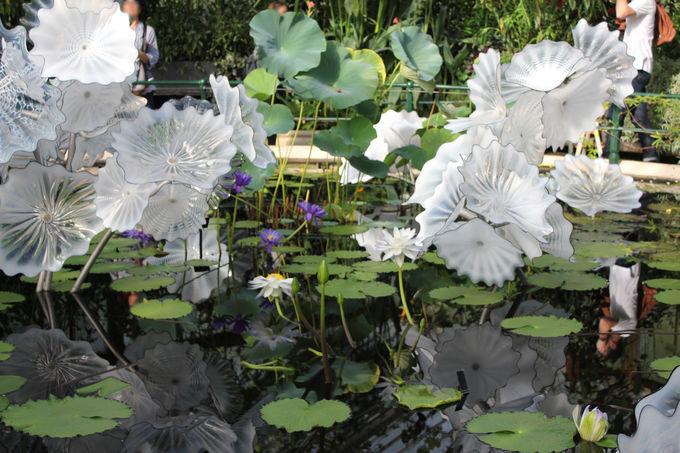 キューのシンボル「パームハウス」で楽しむ熱帯植物