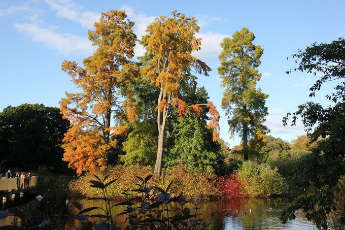 「紅葉」「きのこ」「収穫」限りない秋の楽しみ