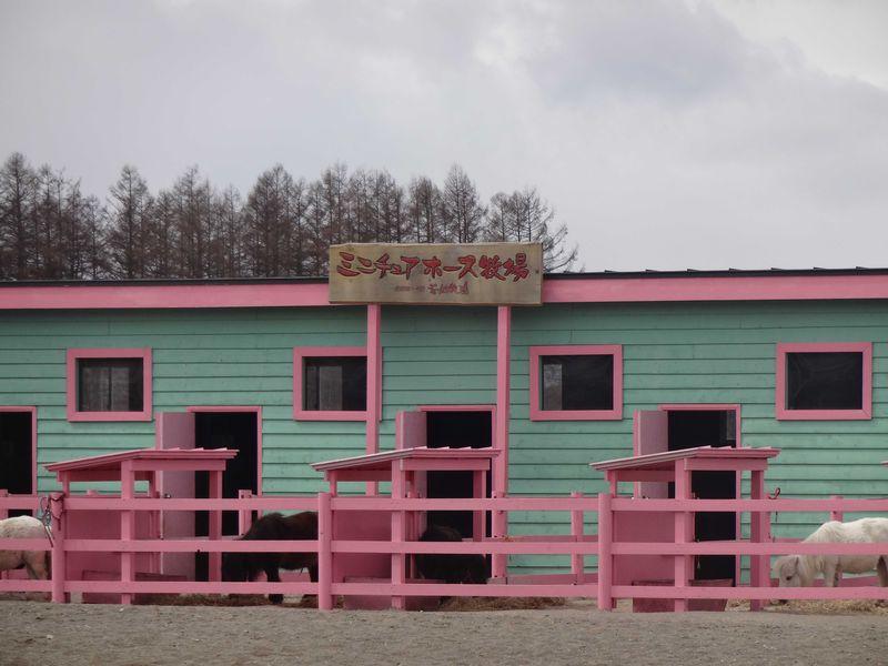 育ち盛りのお子さまも大満足 広ーい花畑牧場で元気いっぱい遊んじゃおう!