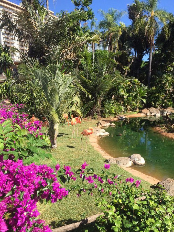 まるで植物園?花や緑に囲まれハワイらしさ満載!