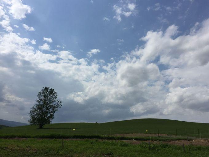 堪能したい景色は「THE北海道」