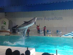 イルカが舞う!トドが飛ぶ!ショーで魅せる「おたる水族館」