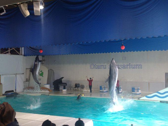 豪快なイルカのダイブは迫力満点!