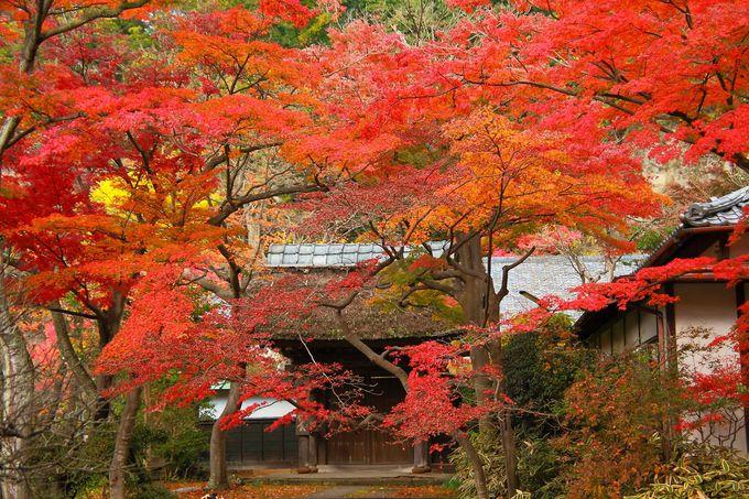 境内が赤、橙、黄色に染まりあがる「秋」