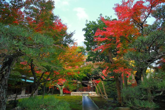 茅葺屋根にその歴史を感じる観音堂周辺の紅葉