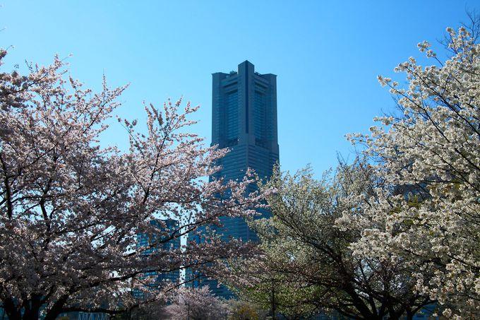 春は満開の桜に囲まれた遊歩道を満喫!