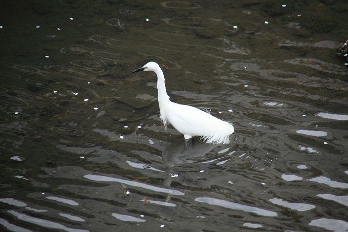 川面でくつろぐ水鳥の様子も!