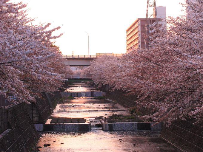 お花見をする人を遠目に、その場の雰囲気を感じることができる「西山橋」