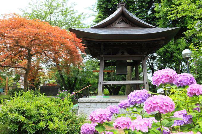 都県境の尾根の麓にたたずむ「東雲寺」は隠れた花観賞スポット!