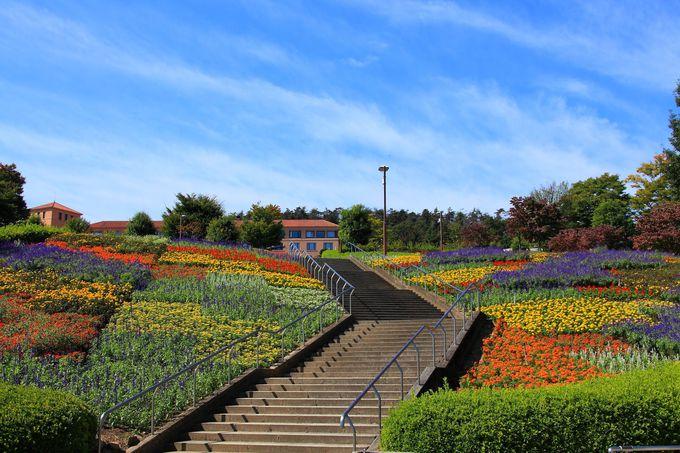 昼間の園内も四季折々の様々な花が咲き乱れる
