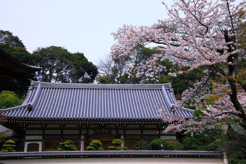各塔頭と桜とのコラボが美しい「春」