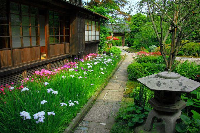 初夏の境内庭園も様々な花が咲き乱れる!