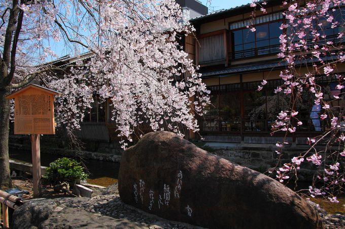 「かにかくに」の石碑とそのお隣のしだれ桜が非常に見事!