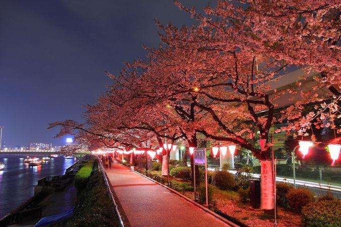 7.隅田公園(墨田区・台東区)