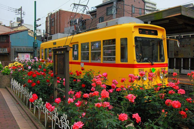 5月中旬が見頃!都電荒川線沿線のバラ観賞スポット4選に行ってみよう!