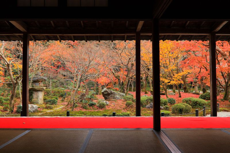 真っ赤な紅葉と未完の枯山水は必見!晩秋の京都「圓光寺」