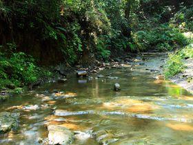 横浜市の中央部に美しい渓谷が!その名も「陣ヶ下渓谷公園」