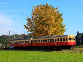 車窓から眺める絶景!紅葉が楽しめるおすすめ鉄道路線5選