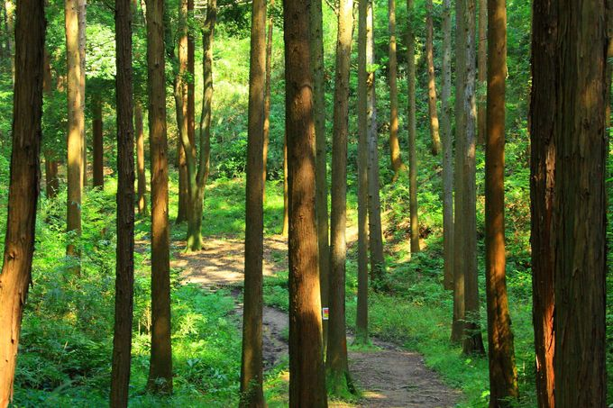 里山の中は散策路が整備されている