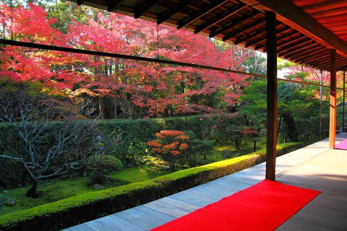 方丈から見る紅葉は見れば見るほどその魅力が深まるばかり!
