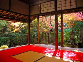 紅葉庭園の美しさは格別!穴場度も高い京都「妙心寺桂春院」
