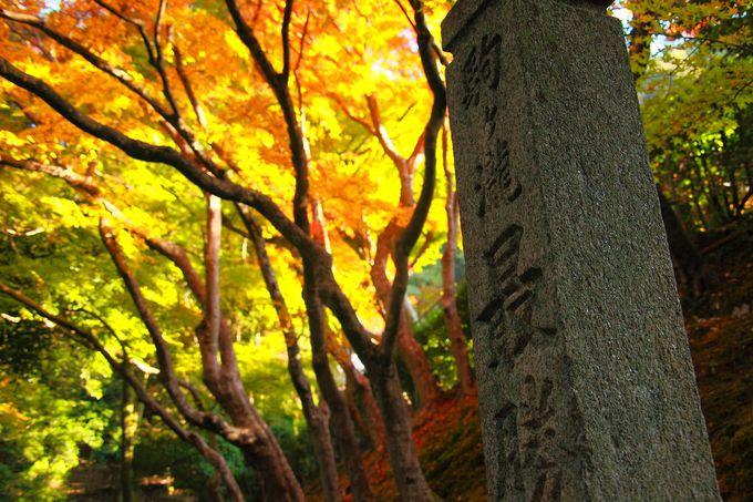 山門をくぐる前から鮮やかな紅葉に期待を込めて!