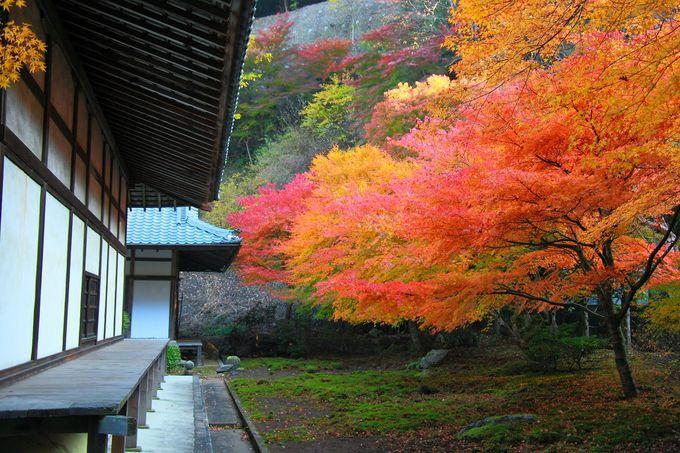 本堂裏手の真っ赤な紅葉を見ながら奥の院へと足を運んでみる