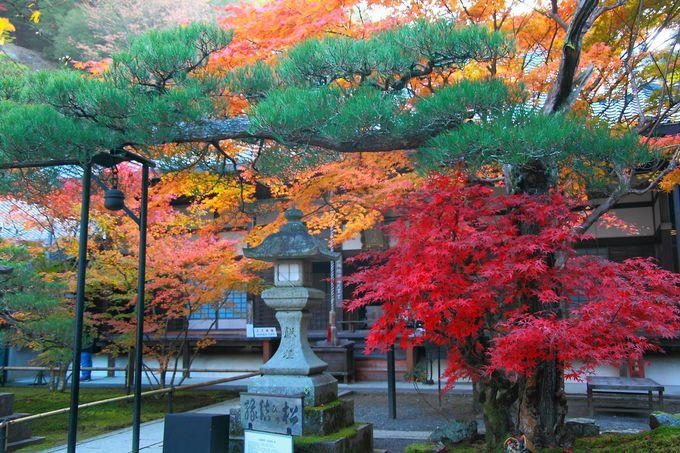 縁結びの松と紅葉のコラボレーションほど鮮やかなものはない!