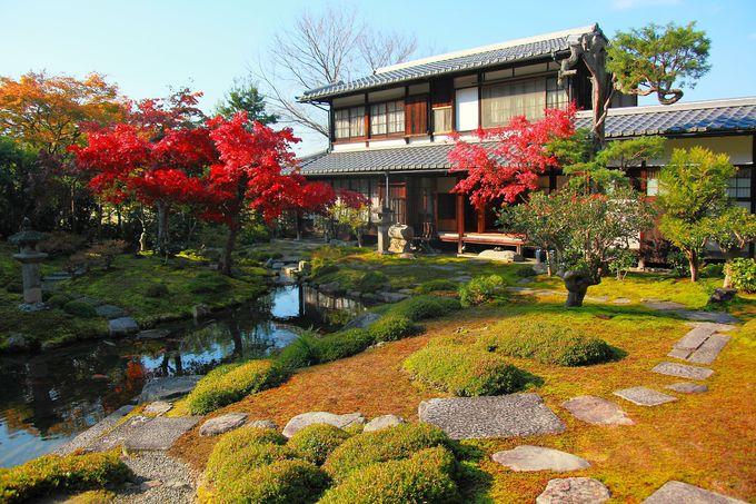 紅葉は少ないが色彩豊かな庭園が目を引く