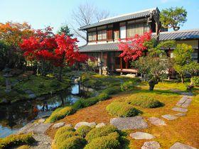 穴場!京都・洛東の片隅にひっそり佇む紅葉庭園「光雲寺」