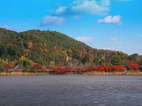 対岸の里山風景に惚れ惚れ!紅葉の季節の京都「広沢池」は開放感抜群!