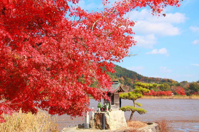 弁天堂周辺は真っ赤な紅葉が目印!