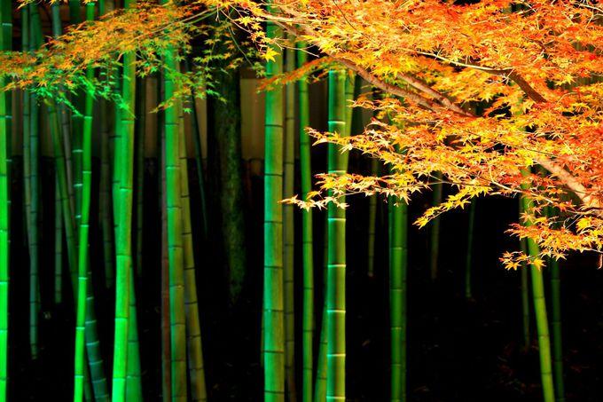 ライトアップされた竹林と紅葉のコラボレーションが和を彷彿!