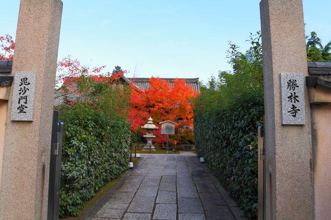 階段を上り詰めると本堂と真っ赤な紅葉が出迎えてくれる