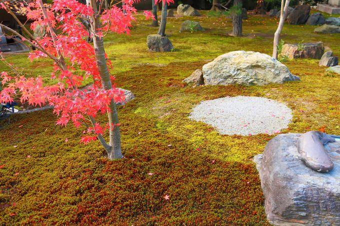 真っ赤な紅葉は庭園内の苔との相性も抜群!