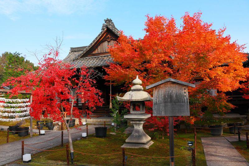 穴場度満点!「東福寺」塔頭の京都「勝林寺」の真っ赤な紅葉庭園