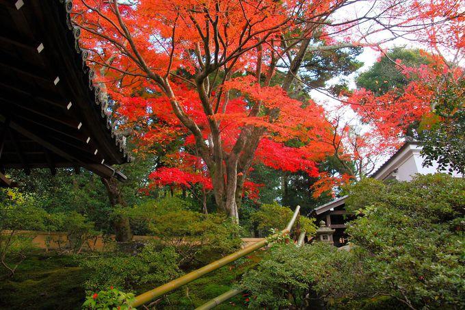 池泉回遊式庭園の階段上部には真っ赤な紅葉が!