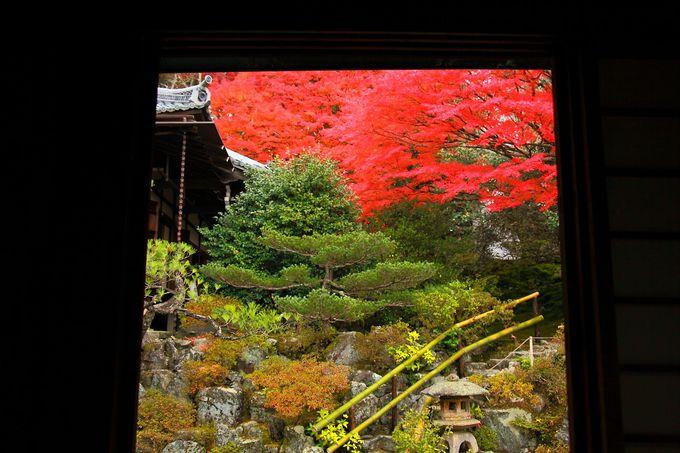 皇族系の寺宝が展示されている書院から眺める庭園も格別!