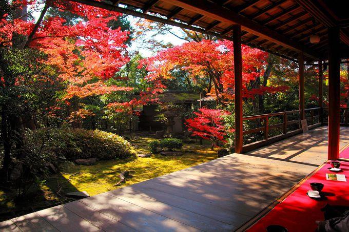 方丈の間から見る真っ赤な紅葉と素晴らしすぎる露地庭園!