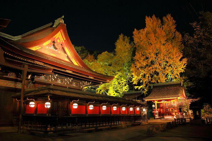 本殿周辺に設けられた提灯が神秘的な空間を作り上げる!