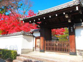 境内散策だけでも十分!晩秋の京都「妙心寺」のオススメ塔頭