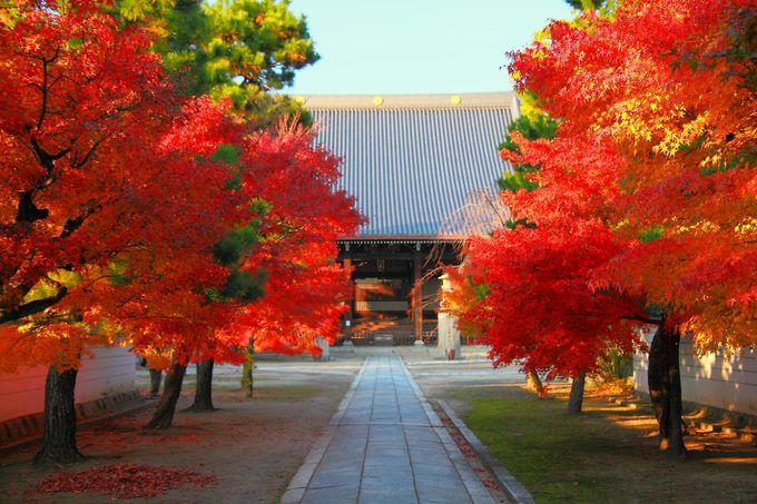 参道から本堂を眺めると真っ赤な紅葉が出迎えてくれる!