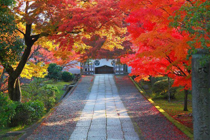 いざ山門をくぐると紅葉に覆われた参道が!