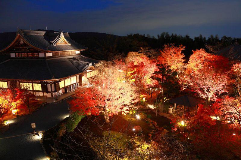 紅葉 ライトアップ 京都