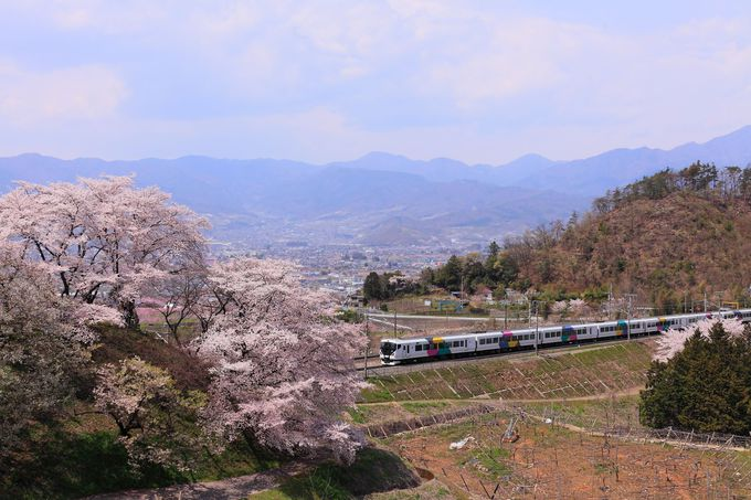 春ともなれば駅周辺に咲き乱れる桜と電車とのコラボレーションも!
