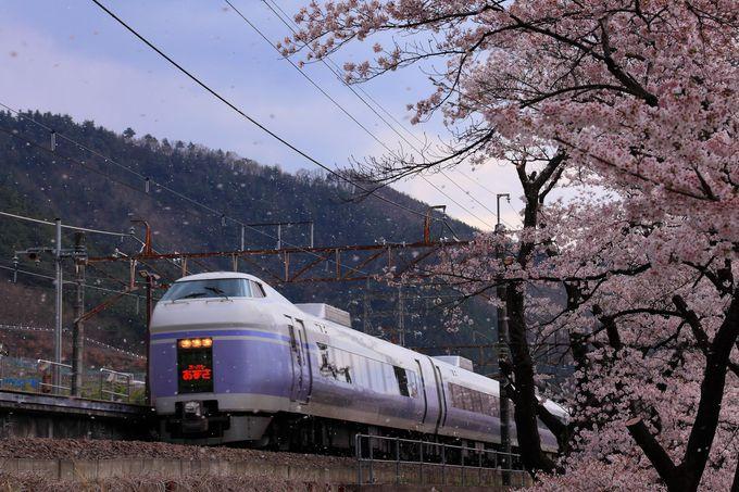 春先の「甚六桜公園」は満開の桜のトンネル状態!