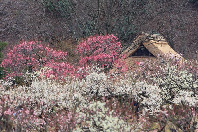梅林の南側に位置する「旧荻野家」