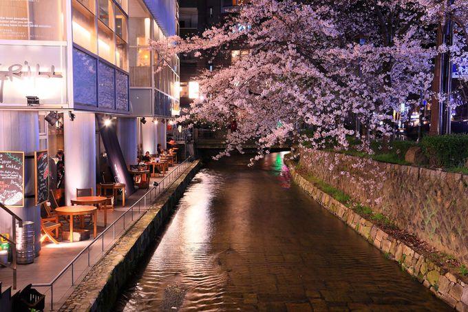 三条通りから見る高瀬川の夜桜も格別!
